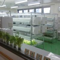 3階水耕栽培室1