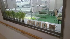 3階水耕栽培室2